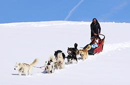 Activité sport : chiens de traineau
